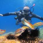 Arbacia lixula - Black sea urchin - Μαύρος αχινός (Σουφούτης)