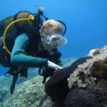 Sarcotragus spinulosus, Black Sponge, Μαύρο Σφουγγάρι