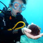 Dive without certification. Scuba diving holidays package for beginners. Dive vacations to Kalymnos island, Aegean, Greece.