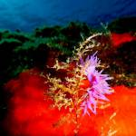 6 dives for certified divers. Scuba diving holidays package. Dive vacations to Kalymnos island, Aegean, Greece
