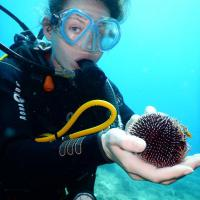 For Beginners. 4 dives vacation packages for new divers who don't want to get certified