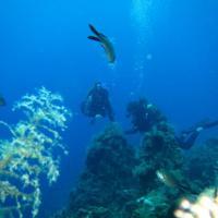 Reef - Υφαλος