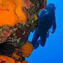 8 dives for certified divers. Scuba diving holidays package. Dive vacations to Kalymnos island, Aegean, Greece.