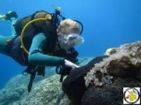 Holidays to Kos and scuba diving Kalymnos.