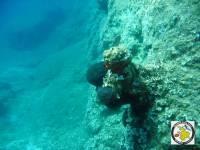 Vlichadia seal cave - colony of sponges