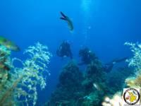 Reefs - Υφαλοι