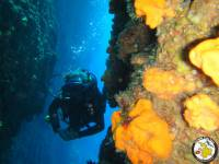 Explore with us the spectacular seabed of Kalymnos Island.