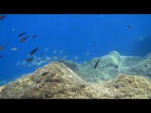 Embedded thumbnail for Natural Aquarium
