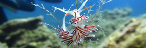Identify the species that we meet during our dives and enjoy even more your scuba diving