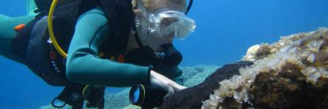 What do you know about Kalymnos Island and about scuba diving?