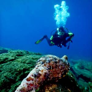 For Certified Divers. Dive vacations with 2 dives in 1 day
